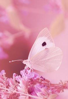 Animal, Butterfly, White, Pieris Brassicae, Summer