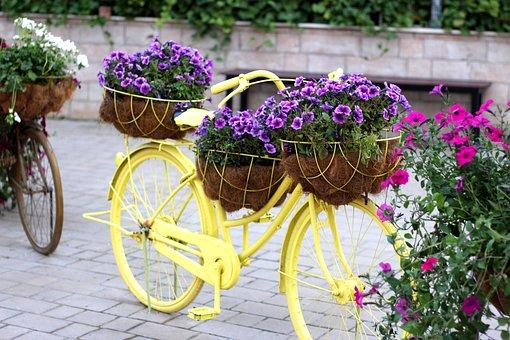 Bike, Floral Bike, Dubai Miracle Garden, Flower