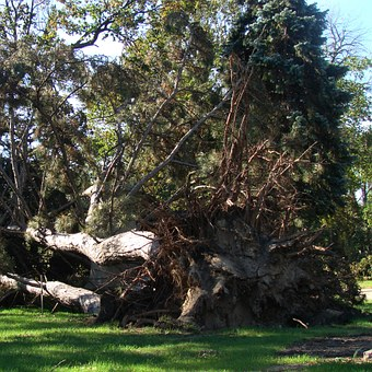 Evergreen Tree, Nature, Powerful, Evergreen, Branch