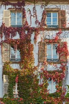 Facade, Home, Hauswand, Window, Vine Leaves, Ivy