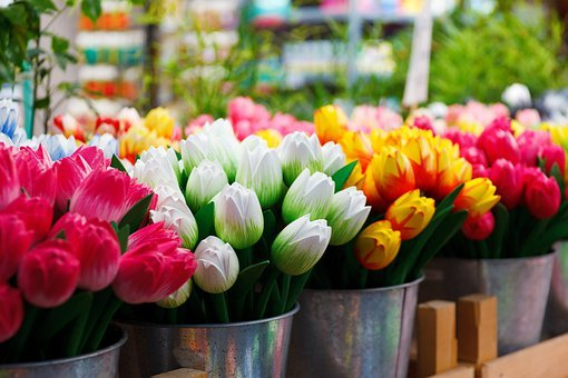 Flower, Group, Colored, Colorful, Tulip, Tulips, Many