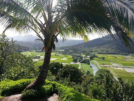 Hanalei Kauai, Kauai, Hawaii, Palm Tree, Hanalei