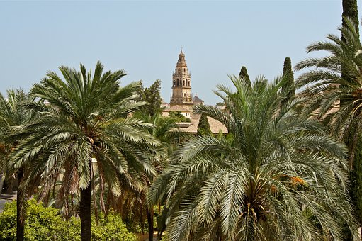 Cordoba, Spain, Cathedral, Architecture, Palms