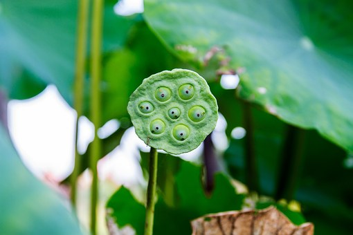 Shower, Lotus, Lotus Beads, Water Wells