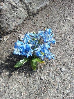 Flowers, Stone, Asphalt, Spring, Sprung, Survival