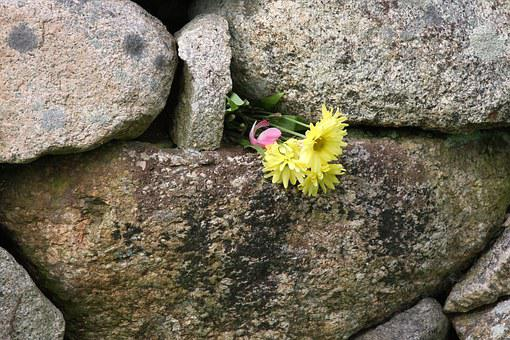 Flower In Wall, Persistence, Survival, Life, Wall