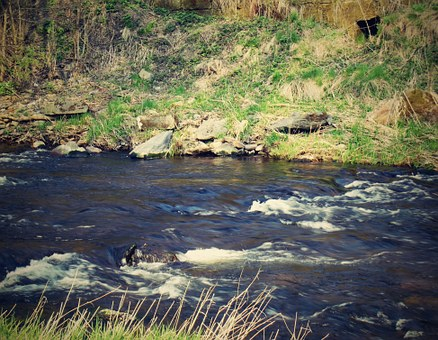 River, Water, Nature, Eagle, Flowing, River Basin