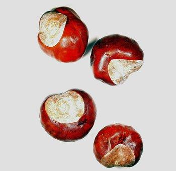 Chestnut, Chestnut Nuts, Chestnut Fruit, Autumn
