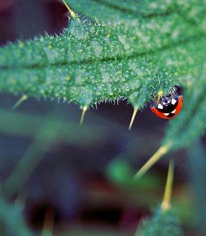 Ladybug, Insect, Beetle, Nature, Thistle, Upside Down