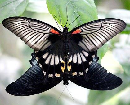 Butterflies, Pairing, Butterfly, Nature, Insect