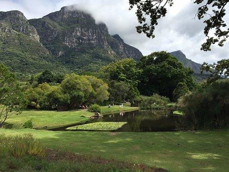 Kirstenbosch, Nature, Botanical, Garden, Green, Cape