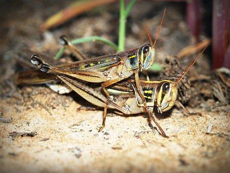 Animal, Background, Beautiful, Bug, Close, Closeup