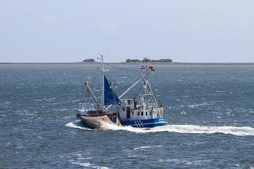 Cutter, Shrimp, Networks, Hallig, Nordfriesland