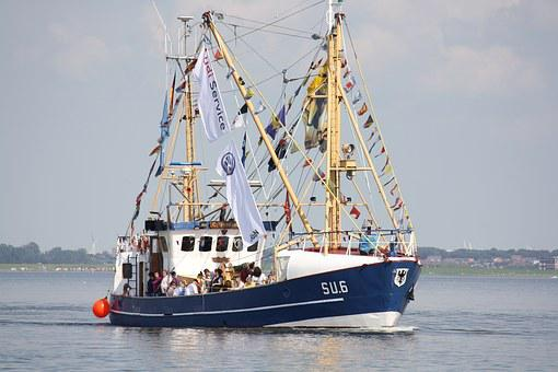 Shrimp, Port, Cutter, North Sea, Harbour Festival