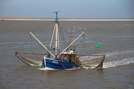 Shrimp, Fishing Boat, Cutter, Fishing Vessel, Fishing