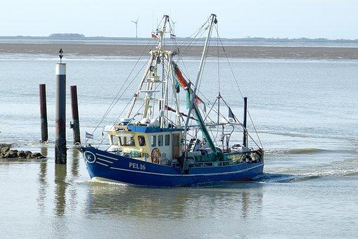 Cutter, Crabs, Fish, Fischer, Shrimp, Sea, Blue