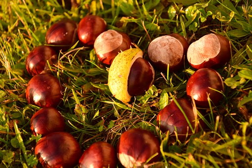 Heart, Chestnut, Horse Chestnut, Ordinary Rosskastanie