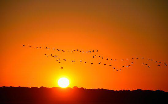 Sunset, Orange Sky, Nature, Birds, Flying, Herons