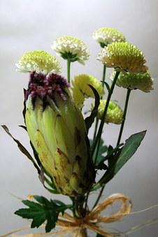 Protea Flower, Flower, Protea, Indigenous, Light Green
