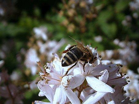 Bee, Bees, Honey Bee, Insect, Worker Inside, Queen