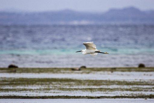 Egret, Little Egret, Bird, Little, Wildlife, White