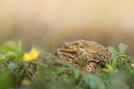 Mating, Yellow, Green, Flower, Spring, Nature, Frog