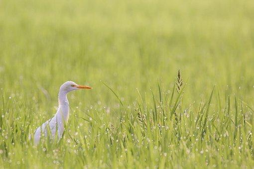 Bird, Mysore, India, Deejayclix, Walking, Morning