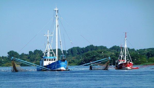 Fishing, Elbe, Nature, Seafaring, Fishing Vessel, Blue