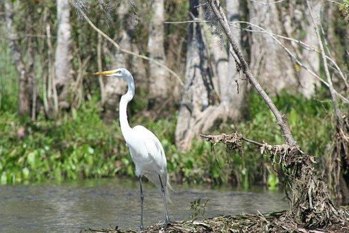 Heron, Water, Bird, Nature, Wildlife, Wild, Animal