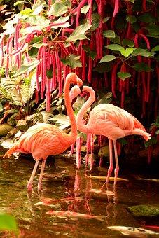 Flamingos, Bird, Pink, Egret, Fauna, Wildlife, Exotic
