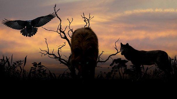 Wolves, Sunset, Creepy, Expensive, Sky, Denmark