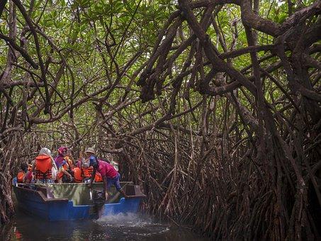 Mangrove, Sri Lanka, Forest, Nature, Tropical, Plant