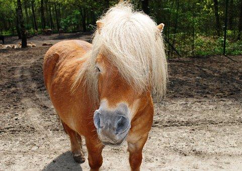 Horse, Pony, Equus Ferus Caballus, Horses, Animal