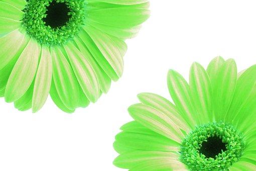 Flowrs, Petals, Green, Nature, Floral, Flower, Bloom