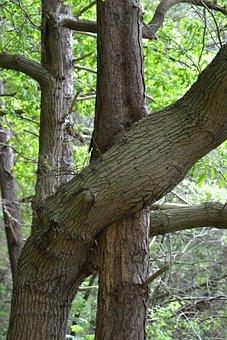 Tree, Hug, Pudagla, Eighth Water