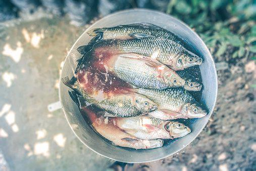 Blood, Bucket, Fish, Food, Fresh, Fresh Fish, Healthy