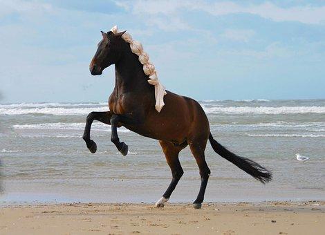 Horse, Prancing Horse, Horses, Animal, Stallion, Mammal