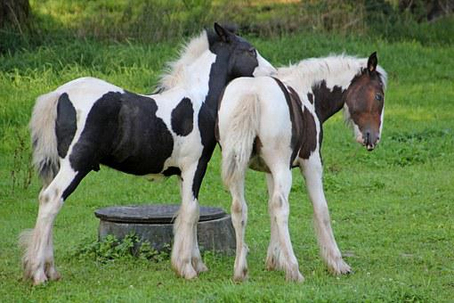 Horses, Pony, Sweet, Friends, Small Horse Breed