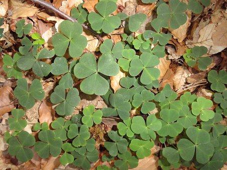 Klee, Luck, Lucky Charm, Nature, Lucky Messenger