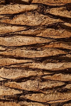 Detail, Tree, Wood, Background, Texture, Plant, Trunk