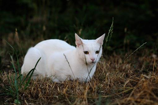 Solid White Cat, Pet Animals, Sorry About That, Sat