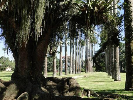 Trunk, Shadow, Roots, Palm Trees, Path, Green, Park
