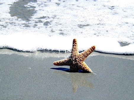 Ocean, Shell, Star Fish, Sea, Summer, Beach, Travel