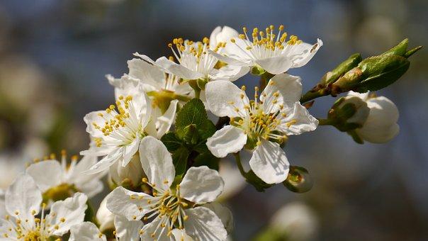 Sunshine, Spring, The Spring Messengers