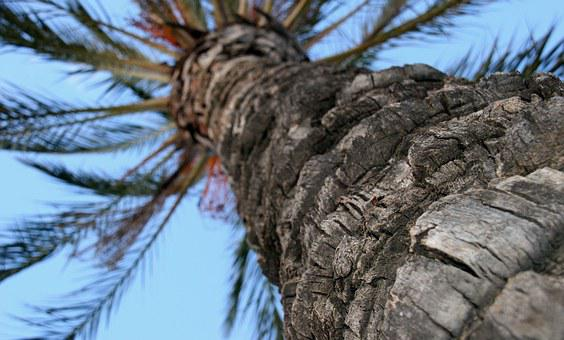 Palm Tree, Trunk, Tree, Background, Texture