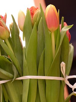 Tulips, Flowers, Tulip, Spring, Bouquet, Tulip Bouquet