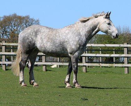 Horse, Field, Tree, White, Animal, Farm, Equine, Rural