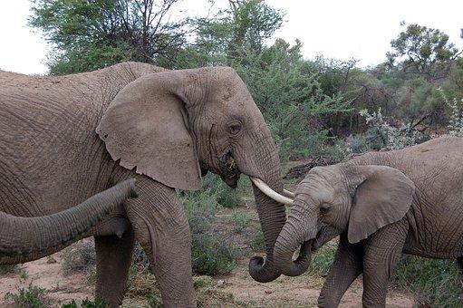 Namibia, Elephant, Safari, Animal, Africa, Big Game