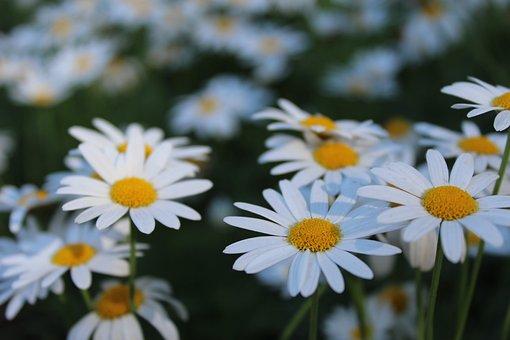 Flowers, Doi Inthanon, Nature
