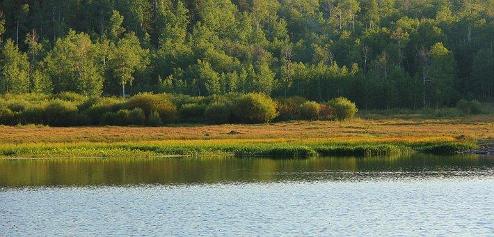 Quaken Asp Glade, Nature, Grass, Meadow, Field, Outdoor
